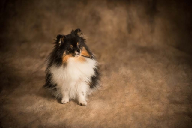 Virginia Beach Virginia Pet Photographer