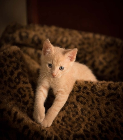 Cat Photographer in Virginia Beach Virginia