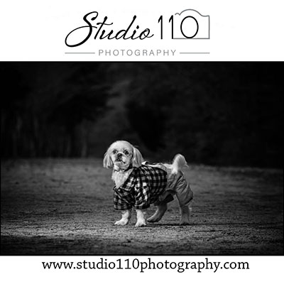 Virginia Pet Photographer : Fur Baby Portraits