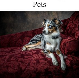 Virginia Beach Pet Photographer